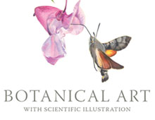 Botanical Art with Scientific Illustration